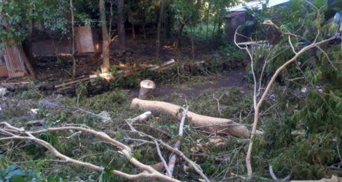 En la imagen aparece uno de los árboles talados en las cercanías del Río Acome, barrio La Libertad. LA PRENSA/SAÚL MARTÍNEZ