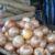 Libra de cebolla llega a 25 córdobas en mercados de Managua