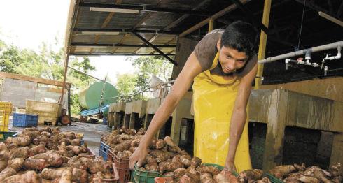 quequisque, hortalizas, mercados