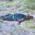 Nicaragüense que había huido de la represión orteguista aparece muerto en Texas, Estados Unidos