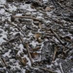 Esqueletos en el Himalaya: los nuevos hallazgos que intentan explicar el misterio del lago con huesos de cientos de humanos