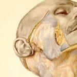 Eduard Pernkopf: el libro de anatomía nazi que los cirujanos todavía usan