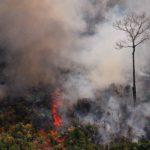 Madonna, Leonardo DiCaprio, Cristano Ronaldo y hasta Emmanuel Macron desinforman sobre incendios del Brasil