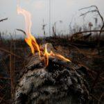 Papa Francisco clama por un compromiso global para acabar con incendios en la Amazonía
