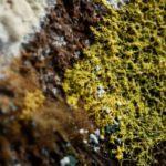 «Blob»: qué es el misterioso organismo con 720 sexos y sin cerebro