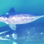 Ballenas: cómo se las ingenian los científicos para pesar a los animales más grandes de la Tierra