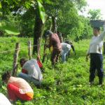 «Cada año se pierde en bosques un área similar al tamaño de Grecia o Nicaragua», advierte la plataforma Tree-Nation