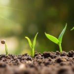 La memoria de las plantas: ¿de qué se acuerdan y por qué es vital para su supervivencia?