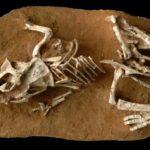 Venden en Rusia huevo de dinosaurio de 65 millones de años