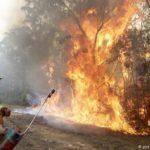 Incendios en Australia amenazan a 327 especies de animales y plantas