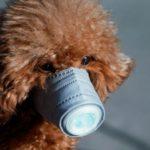 Detectan al primer perro con coronavirus