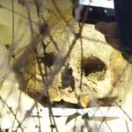 Pobladores de La Comuna, Estelí, alarmados por hallazgo de un cráneo