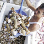 Exportaciones de mariscos y pescados de Nicaragua pasan un mal momento. El coronavirus entre las posibles razones