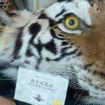 Coronavirus: los riesgos que persisten en China con la prohibición parcial del comercio de carne de animales silvestres