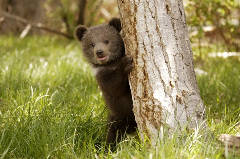 Image result for bear cub