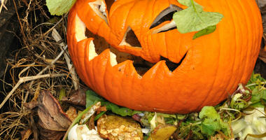 Old Jack-O-Lantern in a compost bin