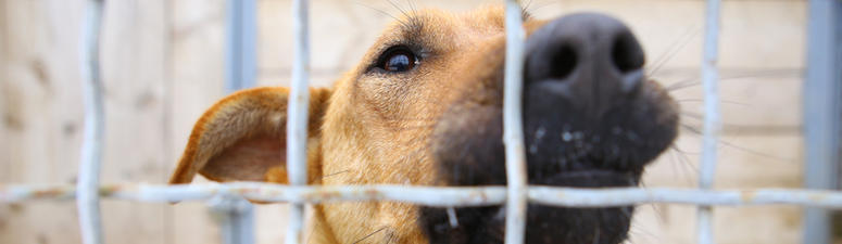 Overcrowded LASPCA cuts adoption fees in half this weekend