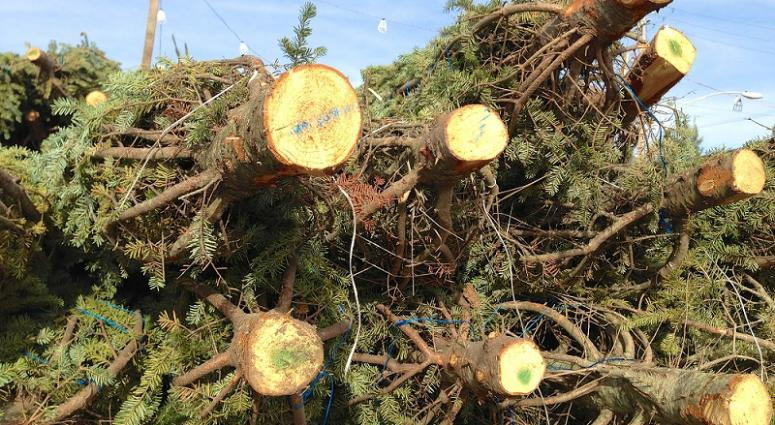 christmas tree recycling time in metro new orleans - New Orleans Christmas