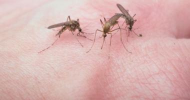 Should we be concerned about mosquitoes carrying West Nile virus?