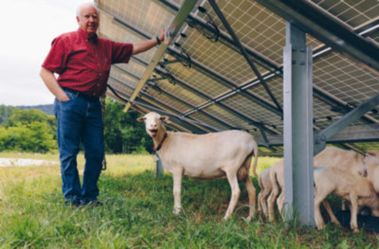 Furman Solar Steve Wood Sheep Farmer