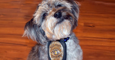 Clemson PD Therapy Dog Ozzy
