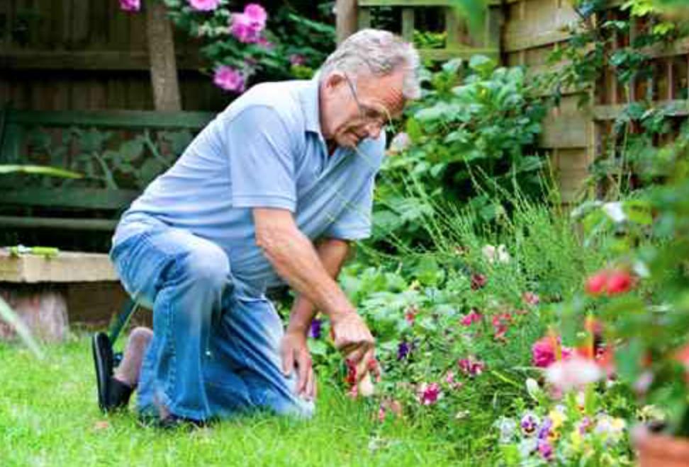 old man having pain from gardening