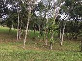 2.arborizado