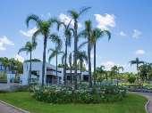 jardins com coqueiros