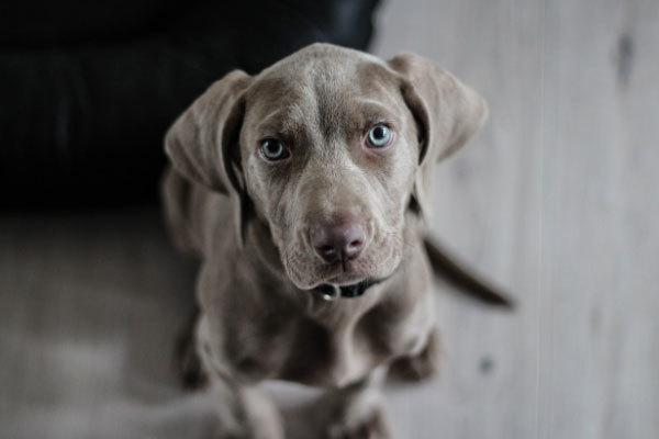 Best Bones Dogs 2