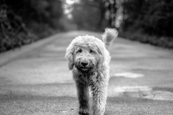 Best Bones Dogs 3