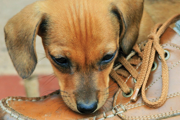 Intro Puppy 2