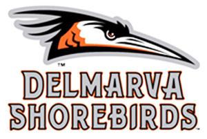 Image result for delmarva shorebirds