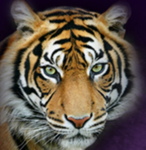 Dupree High School mascot