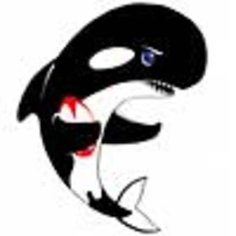 Orca Youth Rugby