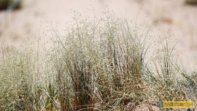 grass_ISDE 2014_4950