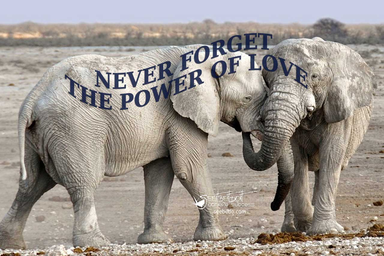 Never forget the power of live