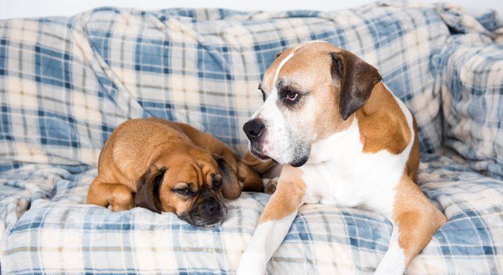 Pet Trust Funds