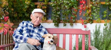 How Seniors Benefit from Pet Therapy