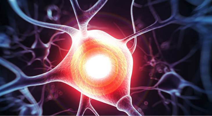 5 Secrets to Building Up Your Neuroplasticity