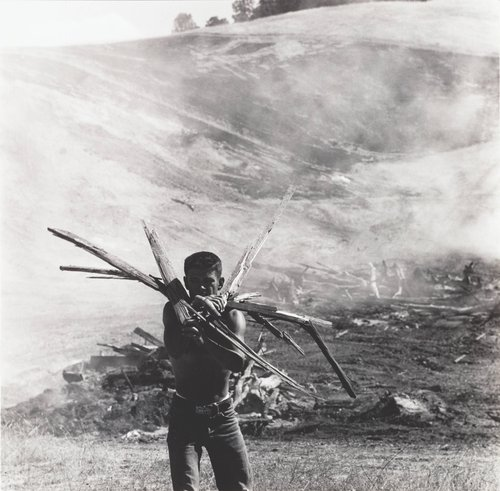 Young Man Gathering Wood, from the series Death of a Valley
