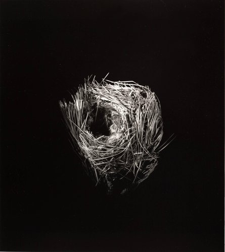 Unknown (Funnel Nest), from the series Grid of Nests
