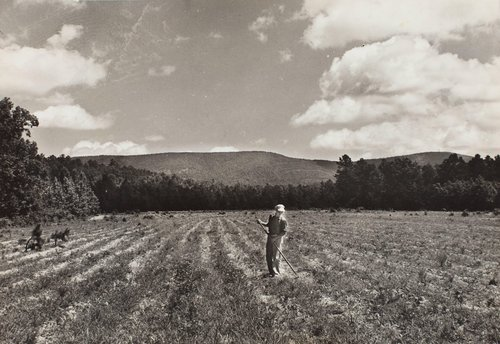 Bill Thompson working his peanut field, Arkansas