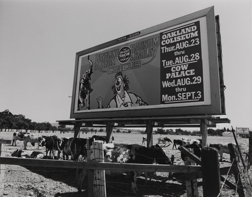 Circus billboard and cows, from the portfolio Leisure