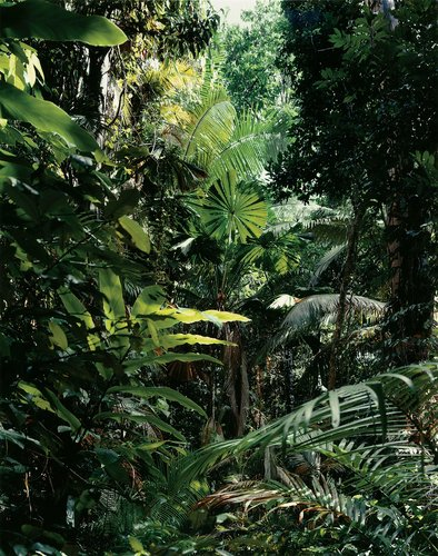 Paradise 1, Daintree, Australia, 1998