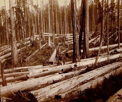 In the Redwoods: N. and S. Bolt Claim, near Arcata, California; P. A. Hanson, Foreman