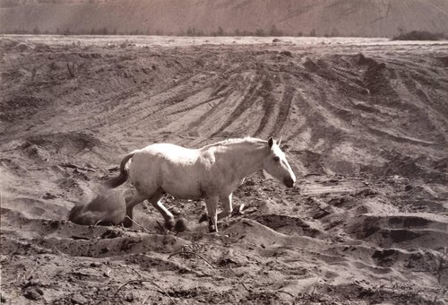 White Horse, from the series Death of a Valley