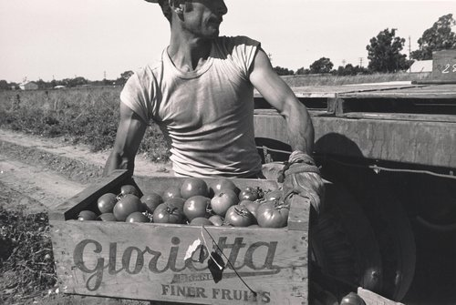 Untitled [Man lifting box of tomatoes], from the series Walnut Grove: Portrait of a Town