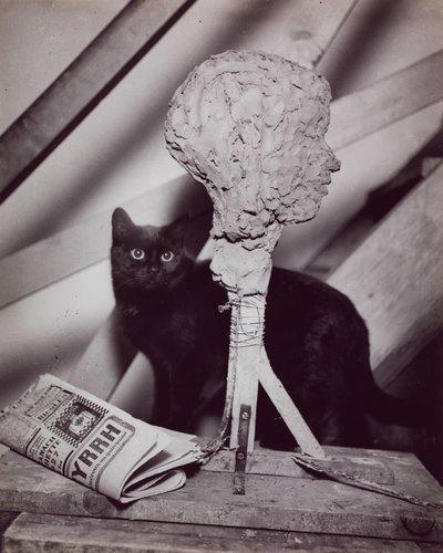 The Studio Cat, Paris