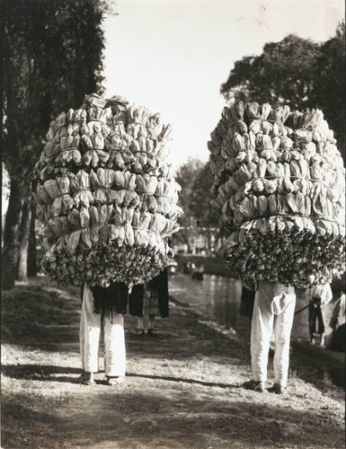 "Untitled [""Indians carrying loads of corn husks for the making of 'tamales' ""]"