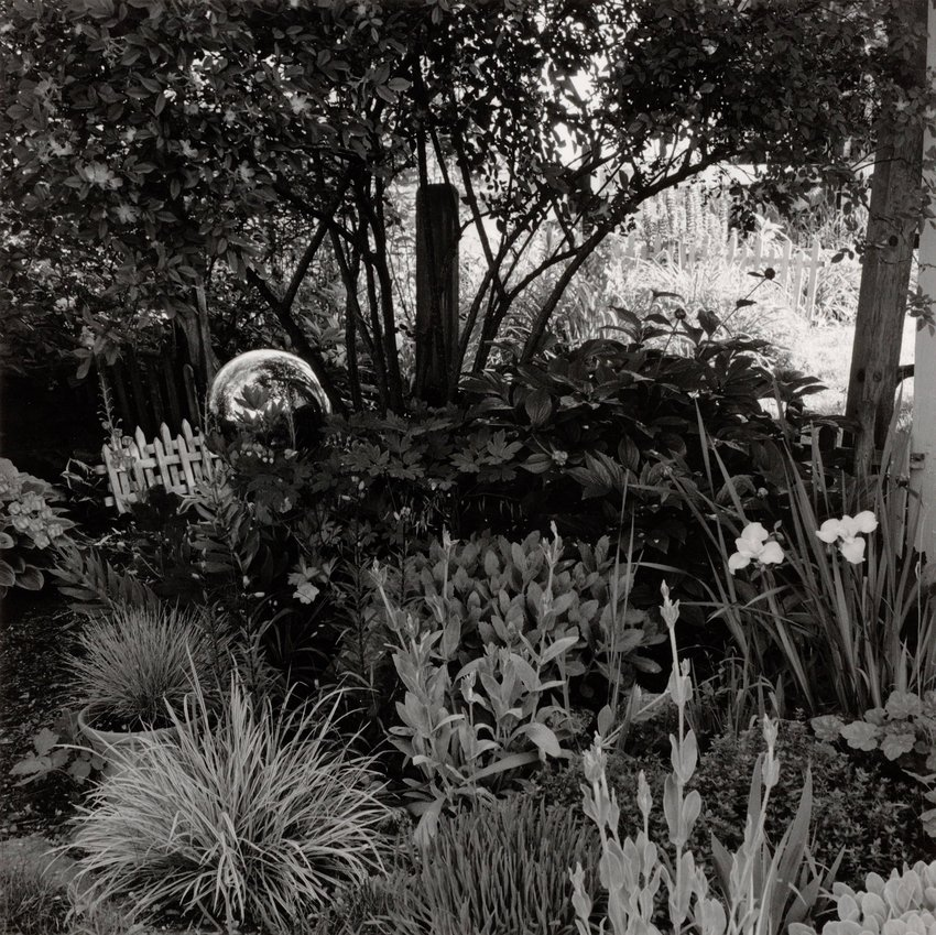 image of 'Home Garden, NE Corner, June'